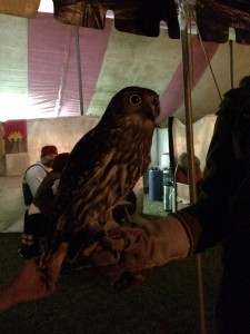 Jessie the Barking Owl photo by Ceara June 2014